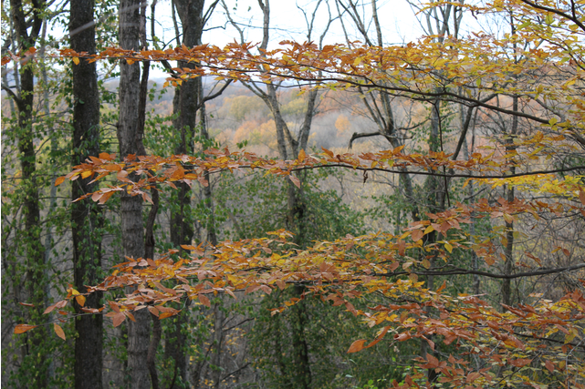 Edwin Warner Park Fall Hiking Trails